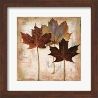 Framed Nautral Leaves III