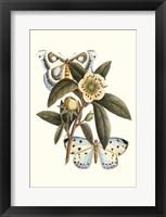 Framed Butterfly Oasis I