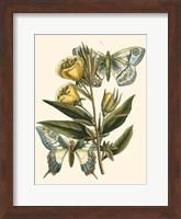 Framed Butterfly Oasis II