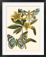 Framed Butterfly Oasis III