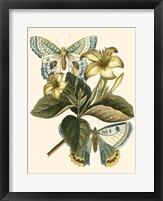 Framed Butterfly Oasis IV