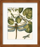 Framed Dragonfly Medley I