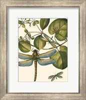 Framed Dragonfly Medley I