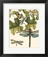 Dragonfly Medley II Framed Print