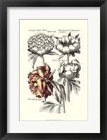 Framed Tinted Floral I