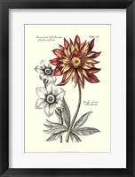 Framed Tinted Floral III