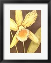 Framed Orchid & Earth I