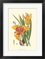Framed Striking Lilies I
