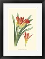 Framed Striking Lilies III