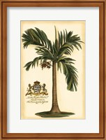 Framed British Colonial Palm I