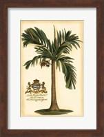 Framed British Colonial Palm I
