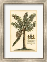 Framed British Colonial Palm II