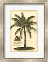 Framed British Colonial Palm III