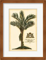 Framed British Colonial Palm IV