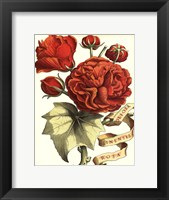 Framed Ribbon Florals III