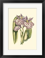 Framed Lilac Orchid II
