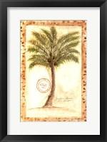 Fan Palm Framed Print