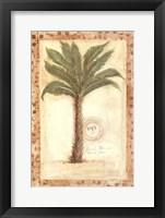 Palmetto Palm Framed Print