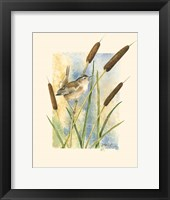 Marsh Wren and Cattails Framed Print