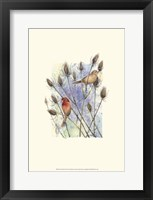 Framed House Finches