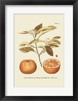 Framed Antique Orange