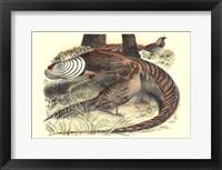 Framed Pheasant Varieties III