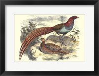 Framed Pheasant Varieties VII