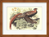 Framed Pheasant Varieties VIII