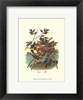 Framed Feathering Nest IV