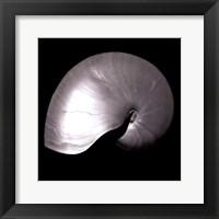 Framed Nautilus Twin I