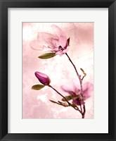Framed Tulip Blush I