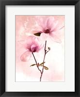 Framed Tulip Blush II