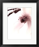 Framed Magnolia Blush I