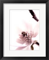 Framed Magnolia Blush II