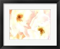 Framed Rose Blush