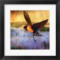 Framed Barnswallow