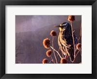Framed Meadowlark