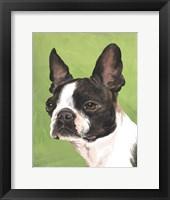 Framed Dog Portrait-Boston