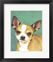 Framed Dog Portrait-Chihuahua