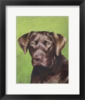 Dog Portrait-Chocolate Framed Print