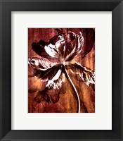 Framed Bronze Parrot Tulip II