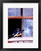 Framed Barn Swallows Window