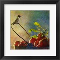 Apples & Hummer Framed Print