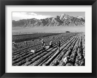 Framed Farm Workers and Mt. Williamson