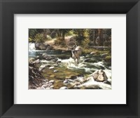 Framed Buck in Midstream