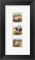 Framed Roosters-2 Chickens