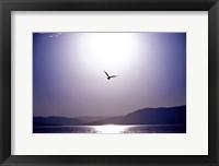 Framed Take Flight