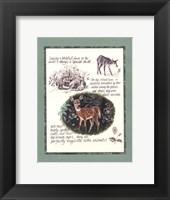 Framed Deer Study