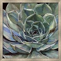 Framed Agave Flower
