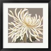 Glorious Whites I Framed Print